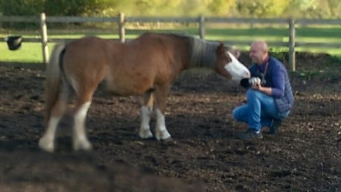 Equine, Photography, Healing, Counselling